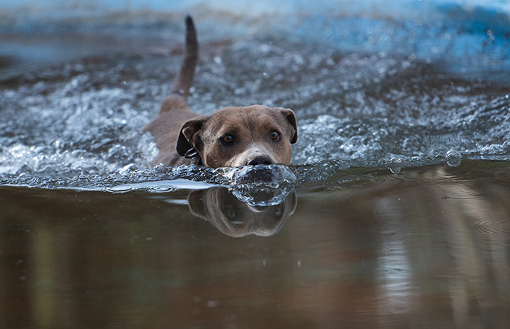 Dog swimming in some water