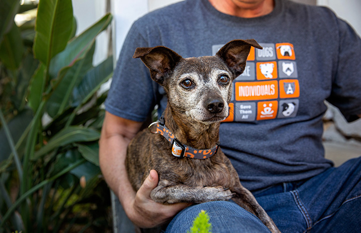 Small dog wearing a Best Friends collar sitting on a person's lap, who is wearing a Best Friends T-shirt