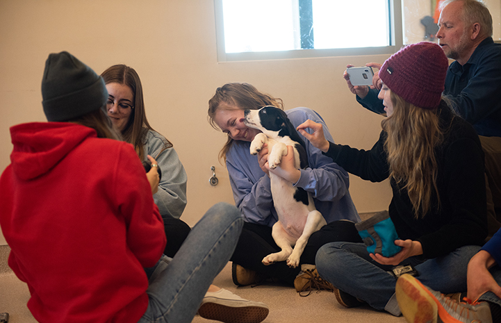 Group of people playing with puppies