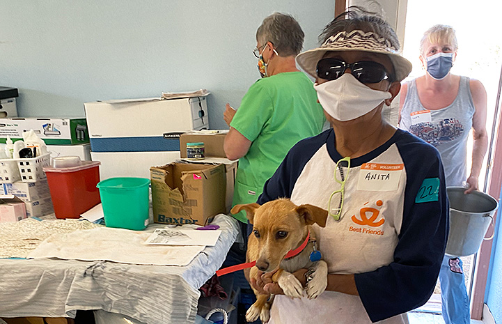 Masked volunteer carrying a small brown dog at the clinic