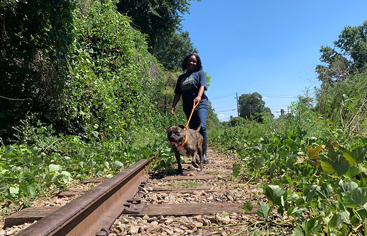 Volunteer Faye Robinson walking a brindle and white pit bull type dog along some former railroad tracks
