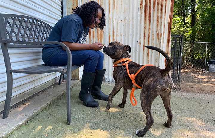 Volunteer Faye Robinson sitting on a bench and interacting with a brindle dog wearing an orange leash and harness