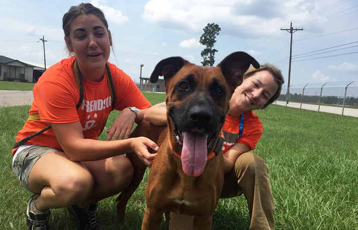 Scooby loves belly rubs and is now safe thanks to Big Dog Ranch Rescue