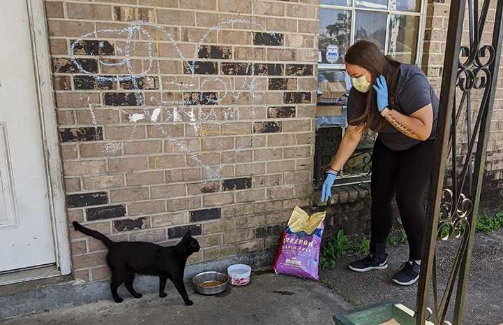 Woman wearing a mask bringing pet food to a black cat