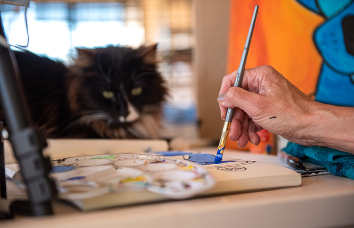 Person painting while a black and white cat watches
