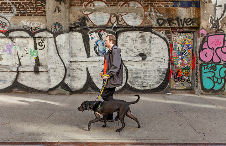 Volunteer Fabio Vitolla walking a dog on a sidewalk with graffiti on the wall behind them