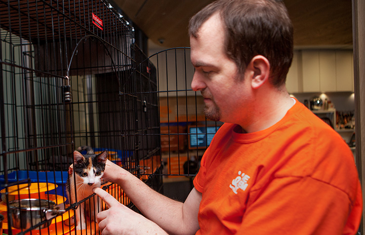 Volunteer Fabio Vitolla petting a small calico kitten in a kennel