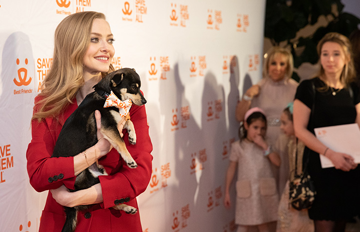 Amanda Seyfried at the Best Friends New York Gala