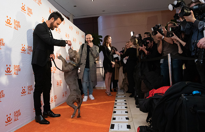 Justin Theroux at Best Friends New York Gala