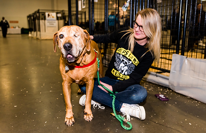 Pandora the dog with a volunteer at the New York Super Adoption
