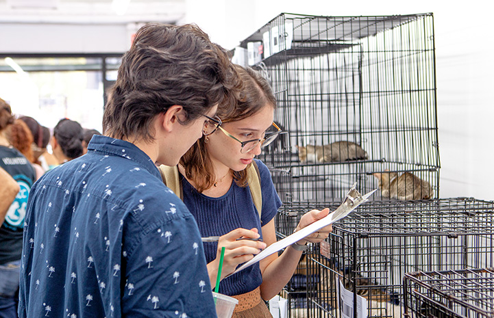 People filling out paperwork in front of some kennels containing cats at the New York cat adoption event
