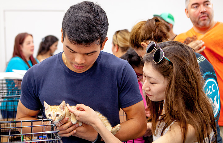 Man holding an orange tabby kitten while a woman pets the kitten at the New York cat adoption event