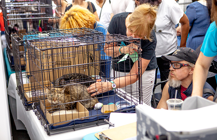 Woman petting two tabby cats in a kennel while a man looks on at the New York cat adoption event