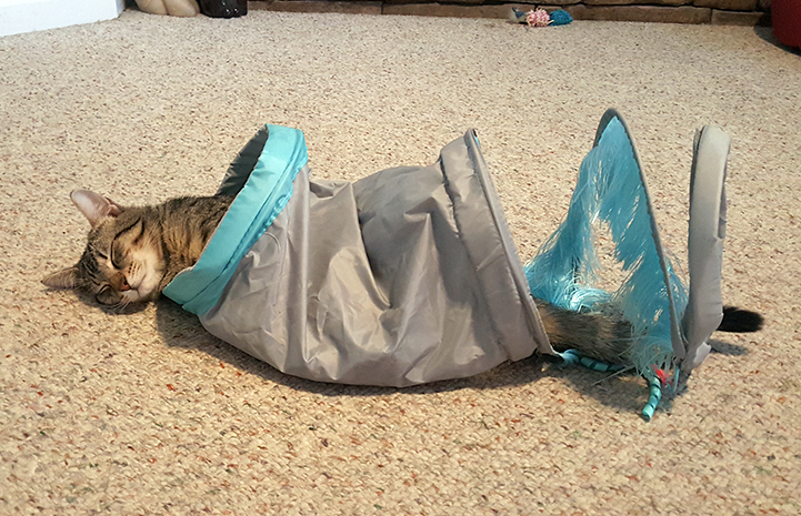 Keoni the tabby cat sleeping in a cat tube