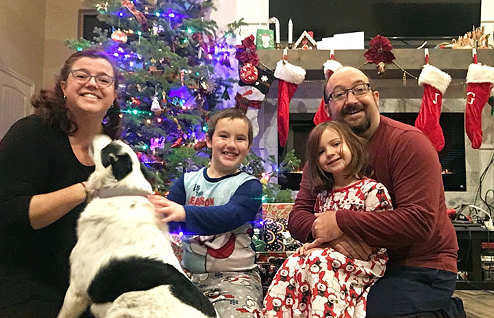 Cool Whip the dog with her family in front of a Christmas tree
