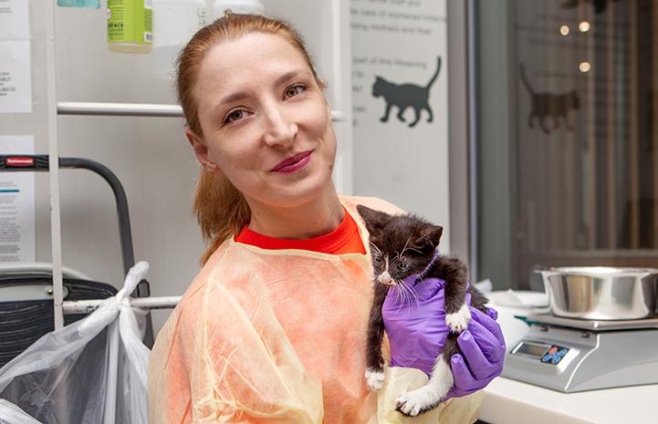 Nursery volunteer Milica and kitten Dallas in the kitten nursery