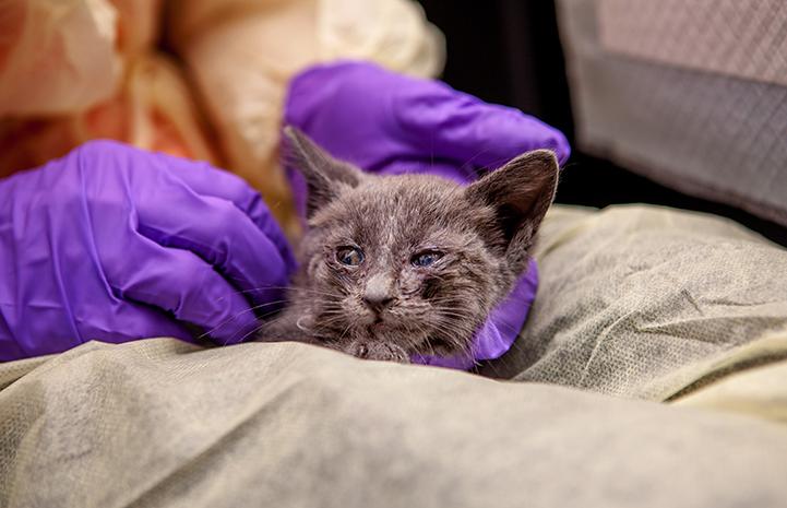 Allyson finds comfort with Milica, kitten nursery volunteer