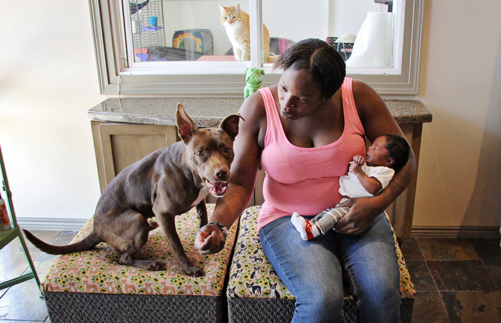 Woman holding a newborn baby sitting on a couch next to Nae Nae, her pit-bull-type dog