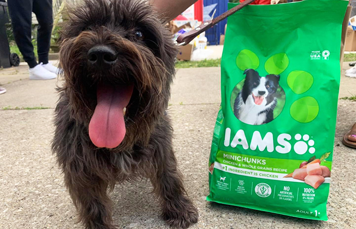 Fluffy terrier-type dog standing next to bag of Iams dog food