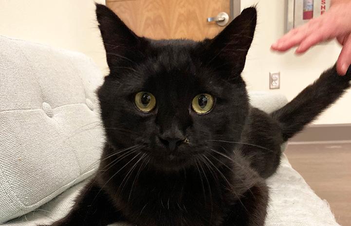 Dennis Quaid the black cat