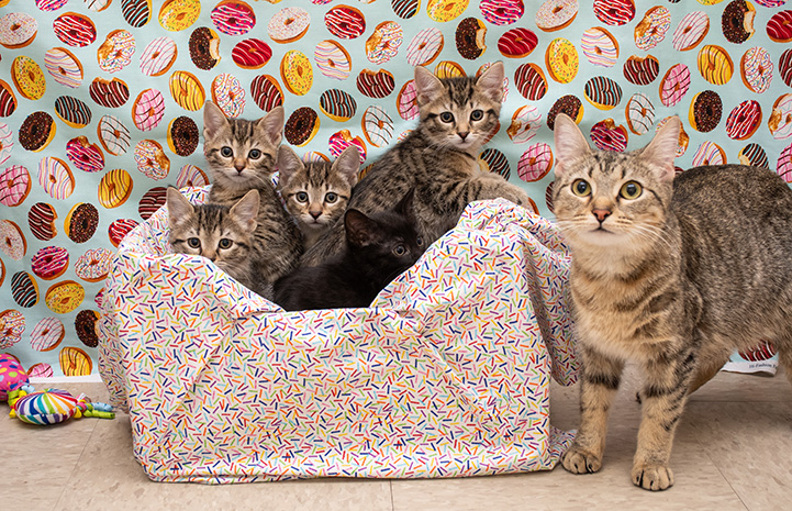 Sprinkles the cat with her kittens in a bed with a fabric donut background