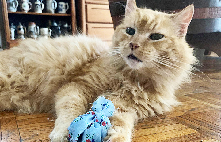 Willard the cat holding a blue toy