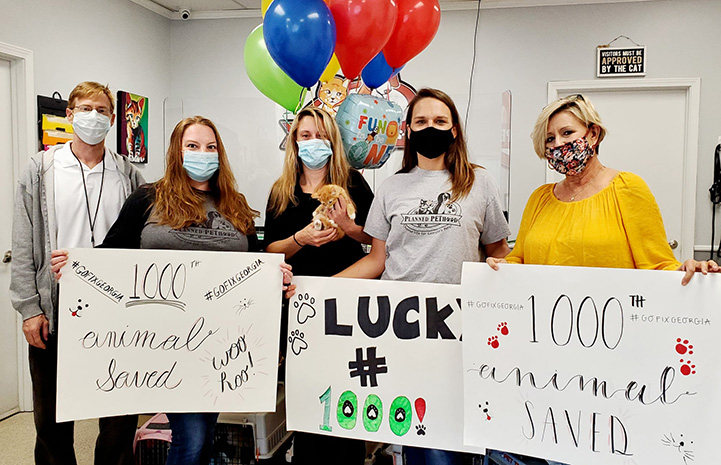 Group of people celebrating their 1000th surgery with signs and balloons and holding the kitten who was fixed