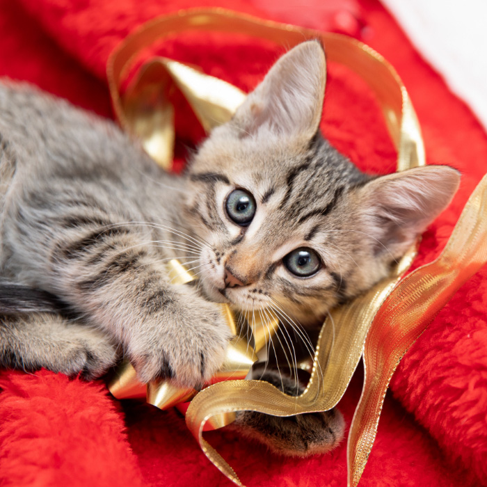 Adorable kitten playing with a gold bow from a package