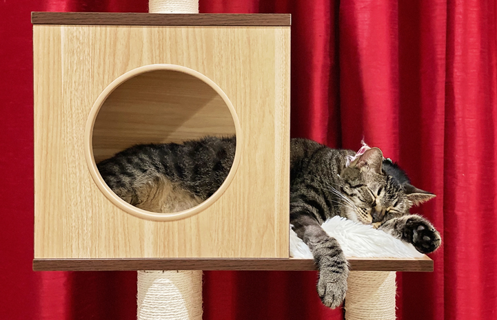Jimmy the cat lying down and sleeping in a cat tree