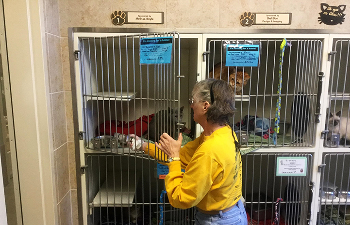 Woman putting a bowl into a cat kennel containing a gray cat
