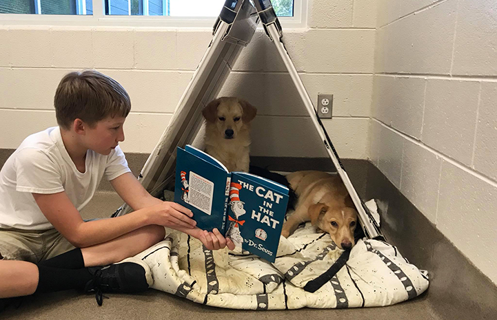 "Young boy reading ""The Cat in the Hat"" to two Labrador puppies in a kennel"