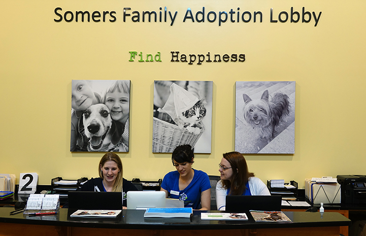 Three women working in the lobby of the Lynchburg Humane Society, with three animal photos behind them