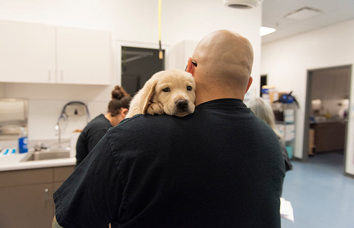 Man holding a blond puppy over his shoulder in a clinic setting