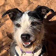 Adopt Norman the dog available for adoption from Kanab, UT