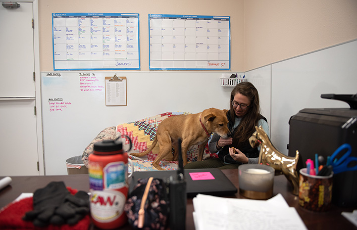 Shocky the brown dog snuggling up to a woman at her desk in an office