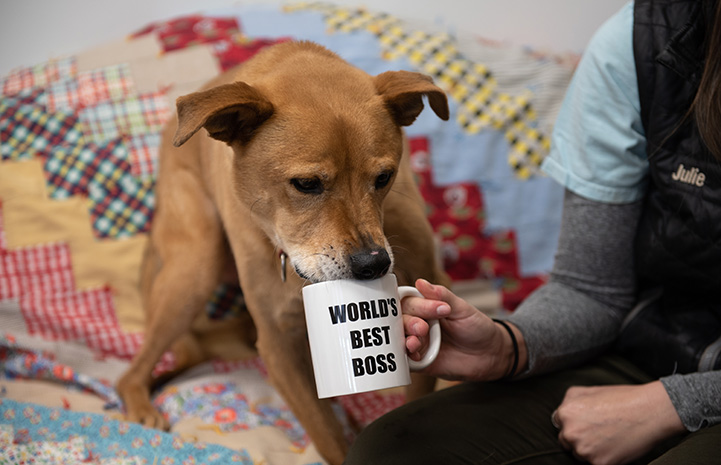 Hand holding a World's Best Boss mug for Shocky the dog to drink from