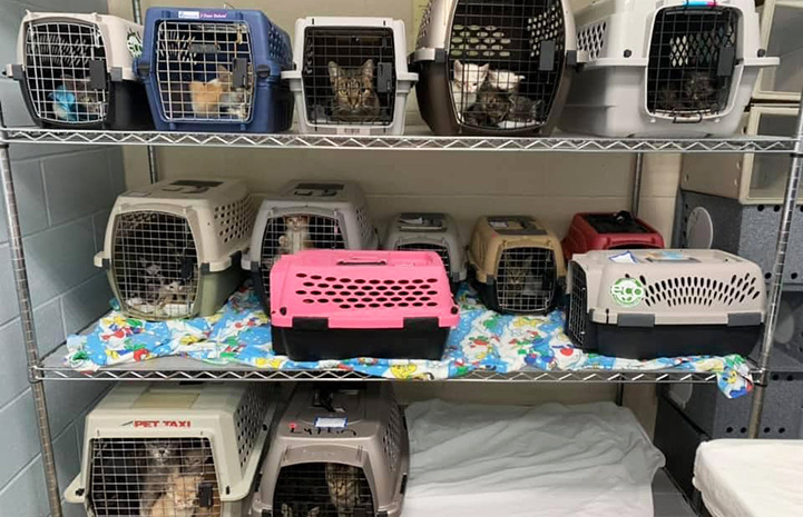 Three rows of kennels containing cats for transport
