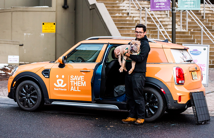 Megatron, an older tan and white pit-bull-type dog with cropped ears, being picked up by a man and put into a Best Friends-branded Mini Cooper car