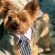 Adopt Oscar the dog available for adoption from New York