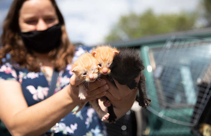 Masked person holding three small kittens