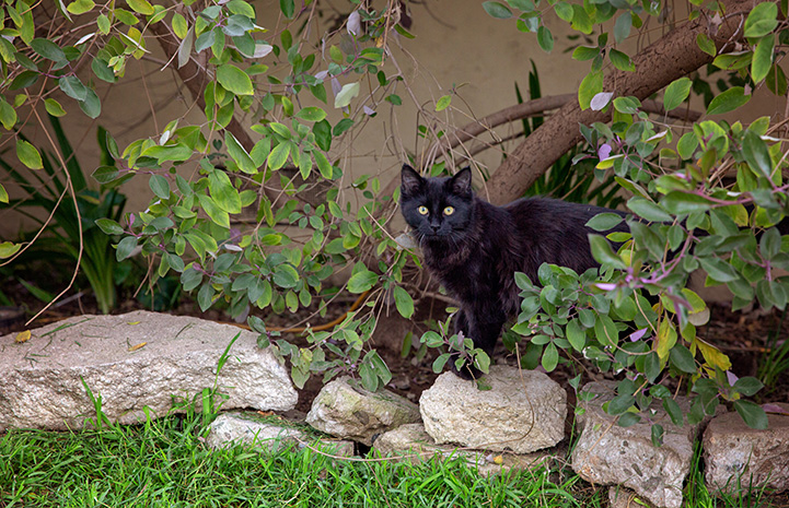 Black community cat standing on a stone border in front of a tree