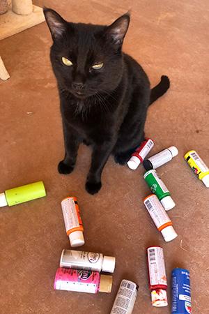 Black cat next to bottles of paint