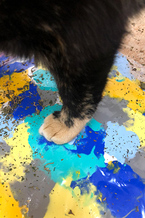 Cat foot stepping on the paint on the canvas to create a painting