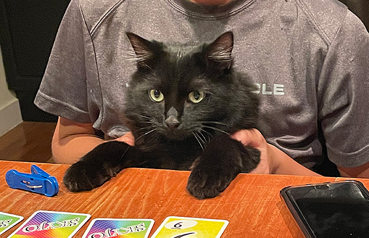 Romeo the cat in front of a person, with front paws on a table, with a card game in front of them