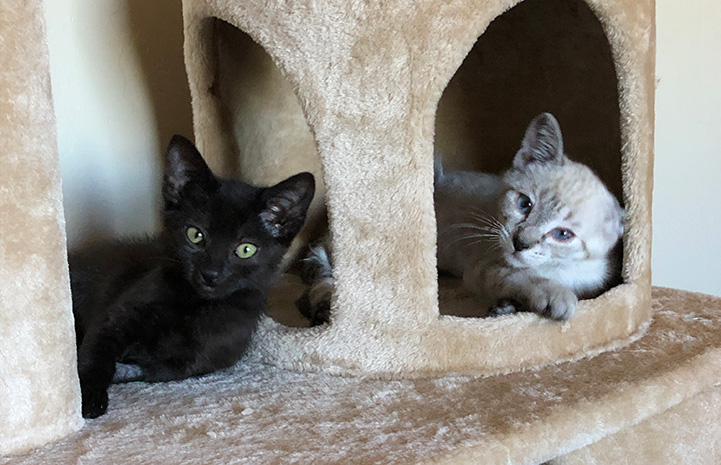 Koi and Kyusus the foster kittens