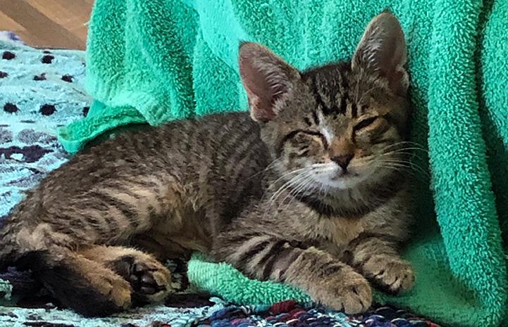 Unstoppable the blind foster kitten