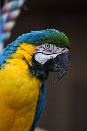 Savannah the macaw parrot