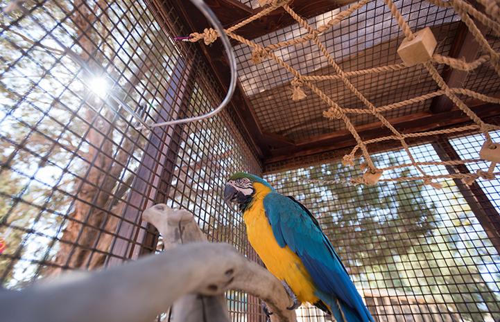 Savannah was a beginner at parrot foraging