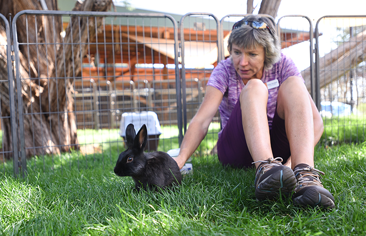 Woman reaching down to pet Coop the black rabbit in the grass in an outside pen