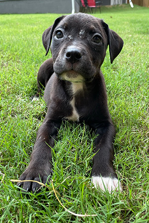 Black and white puppy lying in some grass